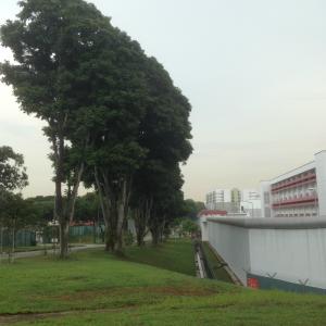 trees 700