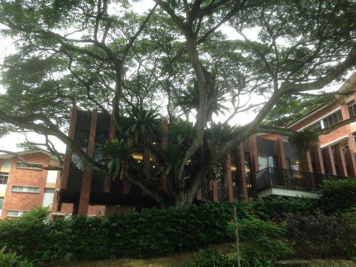 nus tree 700