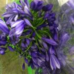 purple 350