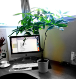 that plant on my desk